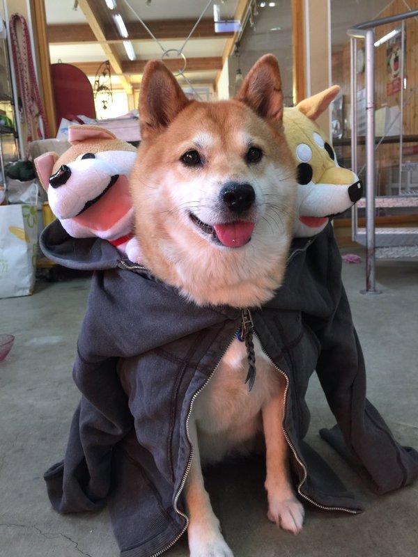 三つ首の地獄の番犬ケルベロス(コスプレ)wwwwwwwww
