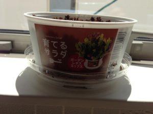 育てるサラダ2