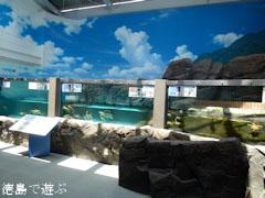 日和佐うみがめ博物館カレッタ 2011