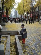 秋の仁寺洞(イチョウが黄色くなりました!)