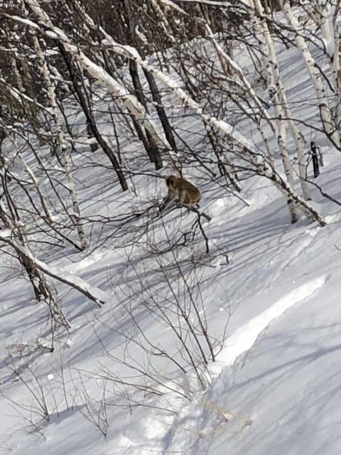 スキースノボ旅行写真_15
