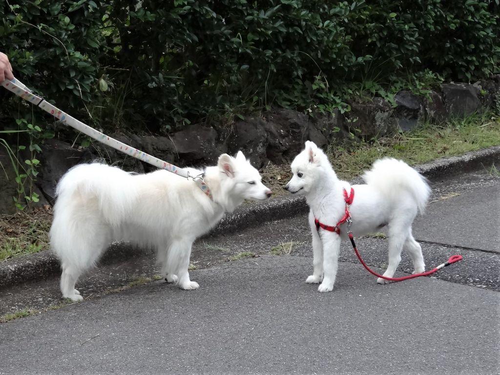 名前 白い 犬