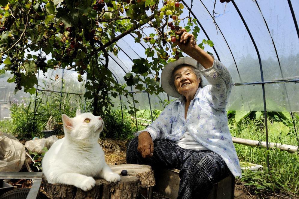 *Miyoko Ihara首次來台個展:在青田十六,讓老祖母和小貓咪感動你的心。 8