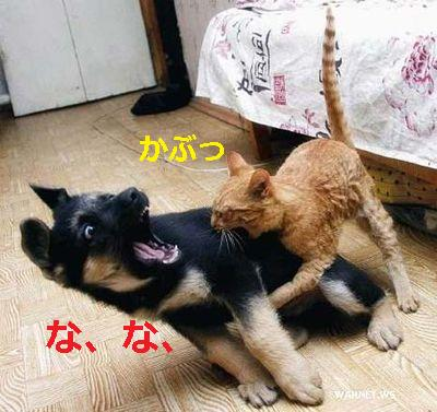 犬と猫の戦い~かぶっ