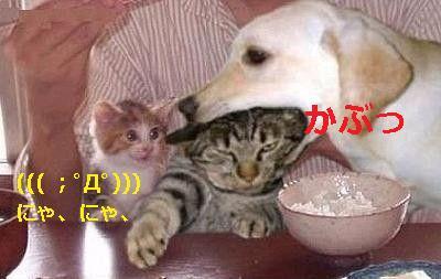 犬と猫の戦い~にゃ、にゃ、ブルブル