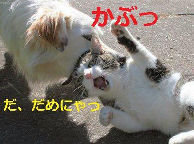 犬と猫の戦い~だ、だめにゃ、