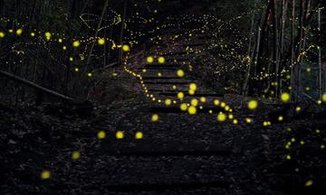 1_fireflies