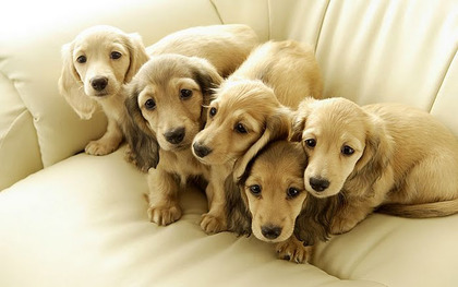 cute-puppies-dogs1