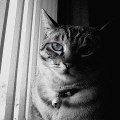モノクロでも目は青い