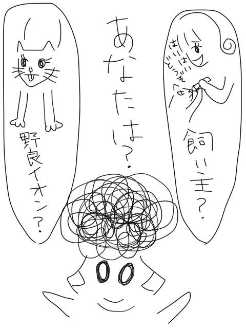 IMG_6397