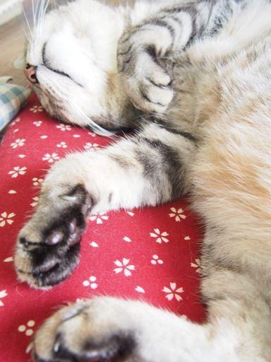 asleep2
