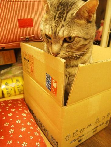 catinthebox