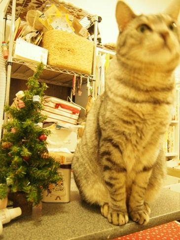 merry3じっとできない猫