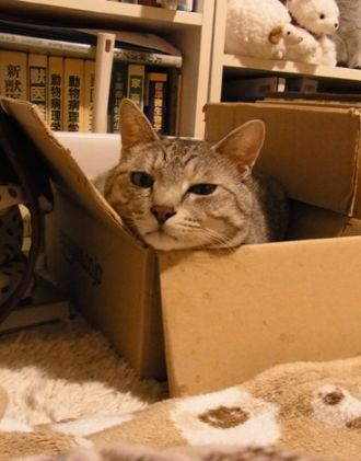 catinthebox2