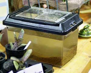 オタマの水槽2