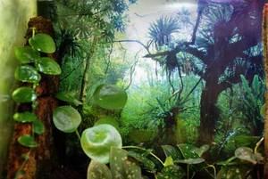 熱帯雨林のバックスクリーン