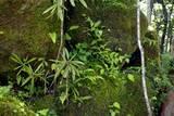 箱根湿生花園3