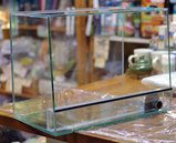一枚ガラスのビバリウム