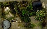 ベルツノガエルの排泄物