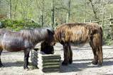 ドイツの馬