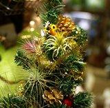 チランジアクリスマス