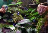 コバルトヤドクガエルのビバリウム