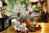 テクトラムのクリスマス