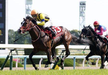 京都新聞杯2018
