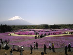 富士芝桜まつり2
