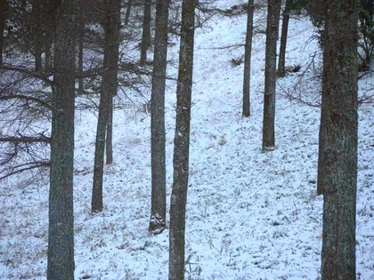 冬の阿蘇1