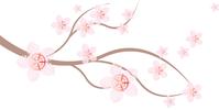cherry_blossom_tripty