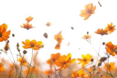 1022花