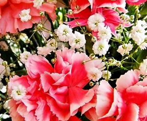 1025花