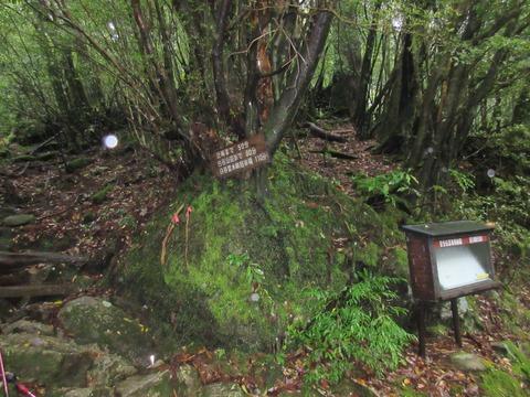 IMG_1825白谷雲水郷への分岐