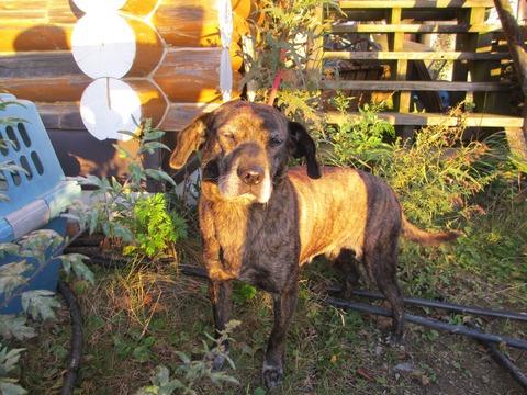 IMG_3207山荘に来ていた猟犬