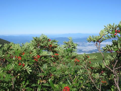 IMG_2232登山道からの眺め