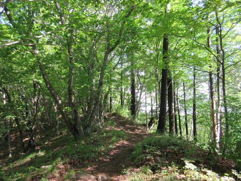 IMG_3167稜線から山頂へ