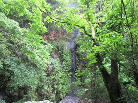 IMG_1871沢沿いの登山道