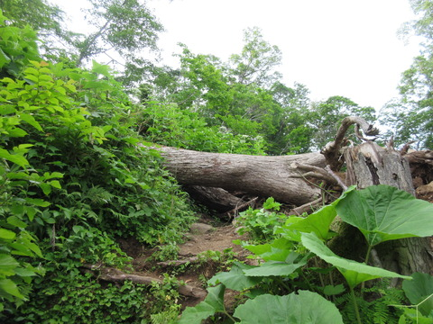 IMG_5961倒木が多い