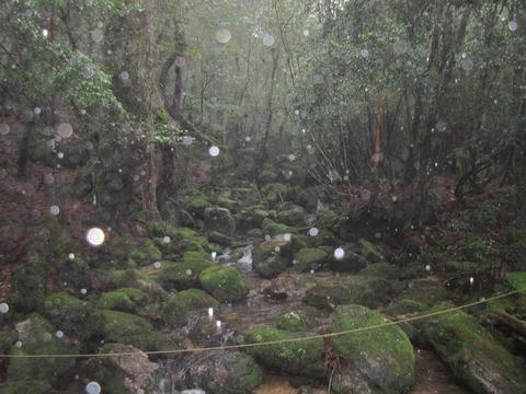 IMG_1829白谷小屋横のコケ石