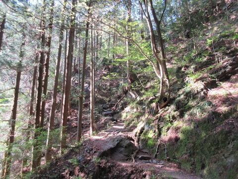 IMG_3063沢沿いの樹林帯