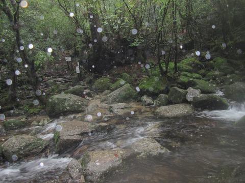 IMG_1832水浸しの登山道