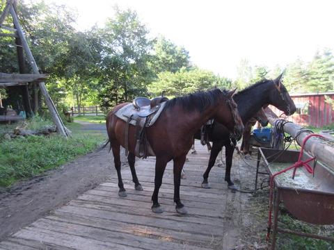 IMG_2281高齢馬のマリアさん