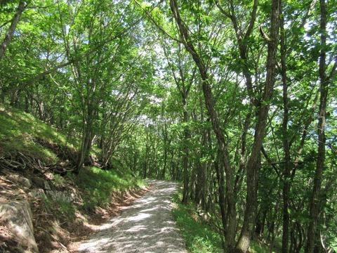 IMG_0582国師ヶ原から歩く