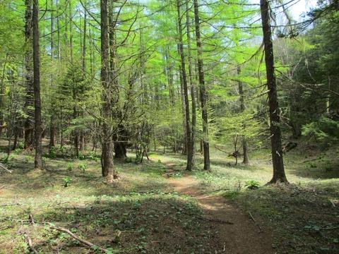 IMG_2697森林を進む