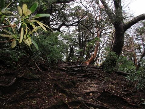 IMG_1798新高塚小屋から縄文杉への道