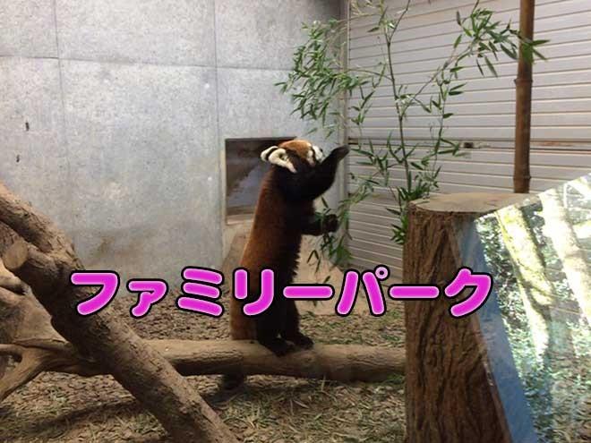 普段直接見れない動物を見に「ファミリーパーク」へ行ってきました!
