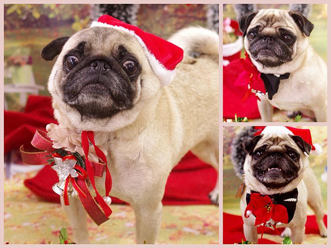 12月の写真はクリスマス!可愛い写真撮ります!