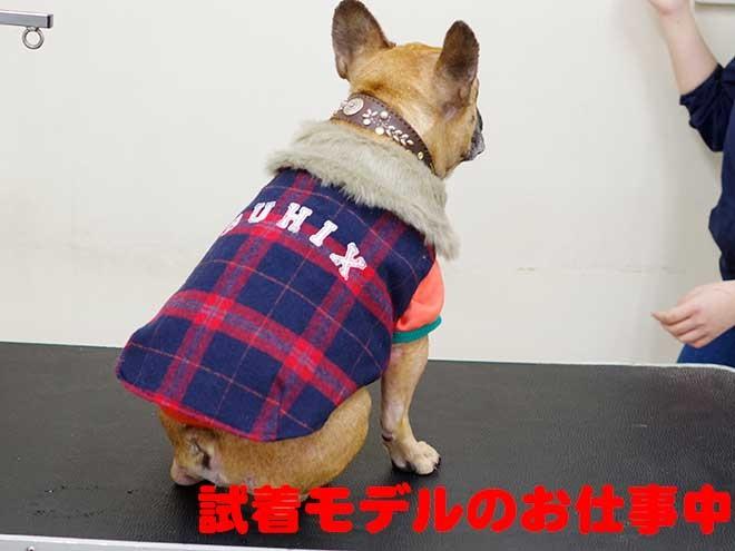 とある日の看板犬アグーの1日に密着!! part2