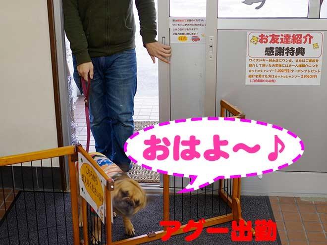 とある日の看板犬アグーの1日に密着!! part1